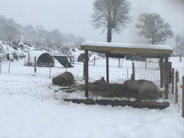 Plump Hill Farm | Winter on a Small Holding | High Welfare Meat Producer | Forest of Dean